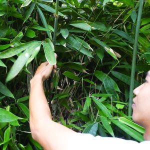 comment faire des pailles en bambou par Bali Boo